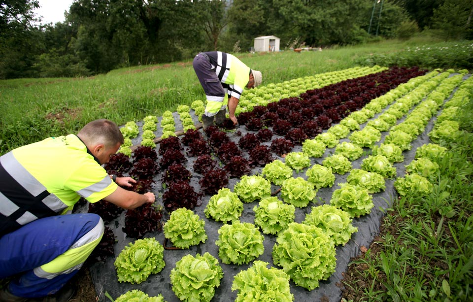 Jardineria empresas de jardineria jardineros a domicilio - Jardineros a domicilio ...